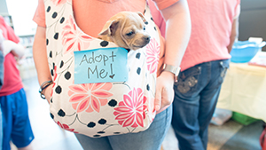 Dog in a bag waiting to be adopted.